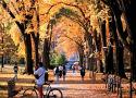 Pennsylvania State University--University Park