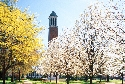 The University of Alabama - Tuscaloosa campus